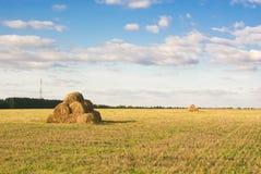 Ландшафт лета связок сена в солнце Стоковое Изображение RF