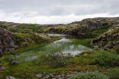 Ландшафт лета северный с небольшим озером Стоковые Фотографии RF
