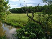 Ландшафт лета сельский в unspoiled природе Стоковые Изображения