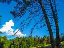 Ландшафт лета сельский в unspoiled природе Стоковые Фотографии RF