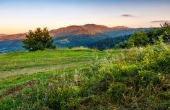 Ландшафт лета сельской местности с гребнем поля, дерева и горы Стоковые Фото