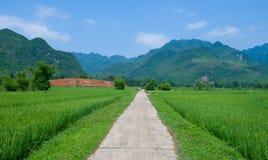 Ландшафт лета с зелеными полем, дорогой и горами стоковые фотографии rf