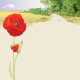 Ландшафт лета с красными маками Стоковое Изображение