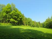 Ландшафт лета с много зеленая трава и небо ясности голубое Стоковая Фотография