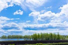 Ландшафт лета с небом и лесом стоковое фото