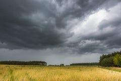 Ландшафт лета с небом шторма над полем рож Стоковое фото RF
