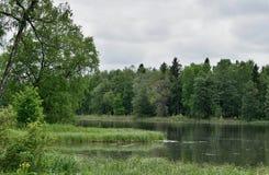 Ландшафт лета с озером, лесом и небом Стоковое фото RF