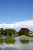 Ландшафт лета с озером Стоковая Фотография RF
