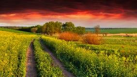 Ландшафт лета с полем желтых цветков Стоковая Фотография