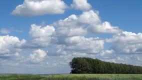 Ландшафт лета с полем пшеницы Стоковые Фото