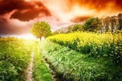 Ландшафт лета с проселочной дорогой на заходе солнца Стоковая Фотография