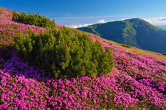 Ландшафт лета с цветками стоковые изображения