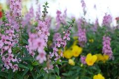 Ландшафт лета с Blossoming лугом с цветками Стоковые Фотографии RF