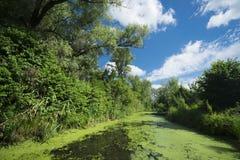 Ландшафт лета с overgrown озером Стоковое Изображение