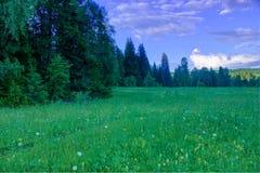 Ландшафт лета, луг березы, небо на заднем плане Стоковые Изображения RF