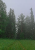 Ландшафт лета, утро деревьев тумана леса Стоковое Фото