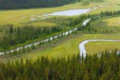Ландшафт заболоченного места riparian реки топи стоковое фото