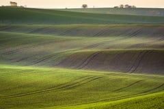 Ландшафт завальцовки весны Moravian стоковые фото