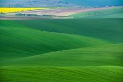 Ландшафт завальцовки зеленого цвета Moravian с полями пшеницы, рапса и малой деревни Естественный сезонный сельский ландшафт в зе Стоковые Изображения RF