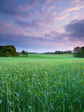 Ландшафт захода солнца весны Стоковые Фотографии RF