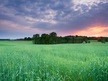 Ландшафт захода солнца весны Стоковая Фотография RF