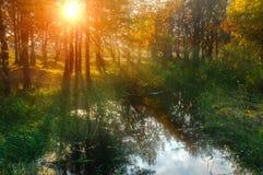 Ландшафт захода солнца осени - лесные деревья около пруда Стоковые Фото
