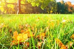 Ландшафт захода солнца осени - парк осени в свете захода солнца с листьями осени на переднем плане Стоковое Изображение