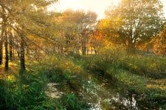 Ландшафт захода солнца осени Стоковые Изображения RF