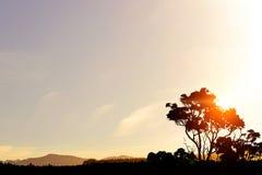 Ландшафт захода солнца сафари Стоковое фото RF