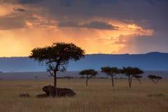 Ландшафт захода солнца Maasai Mara Стоковые Фотографии RF