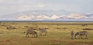 Ландшафт зебры Стоковое Фото