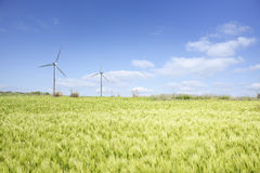Ландшафт зеленого поля ячменя Стоковые Изображения