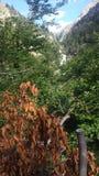 Ландшафт зеленых, коричневых, сини и белизны Стоковое Изображение RF