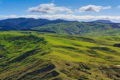 Ландшафт зеленых холмов, положение - Castlepoint, Новая Зеландия Стоковое Изображение