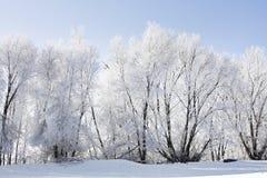 ландшафт зимний Стоковые Изображения RF