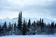 Ландшафт зимы Аляски Стоковое Фото