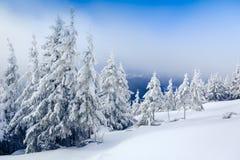Ландшафт зимы в лесе Стоковые Фотографии RF