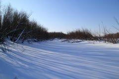 Ландшафт зимы в лесе Стоковые Изображения