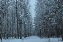 Ландшафт зимы в лесе Стоковая Фотография