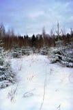 Ландшафт зимы в Латвии Стоковое Фото