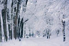 Ландшафт зимы в парке Стоковое Изображение RF