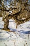Ландшафт зимы в России (зона Kaluga) стоковая фотография