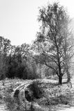 Ландшафт зимы в центральном России стоковые изображения rf