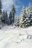 Ландшафт зимы в Beskid Zywiecki- Польше Стоковое Изображение RF
