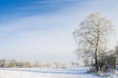 Ландшафт зимы дерева в поле Стоковое фото RF