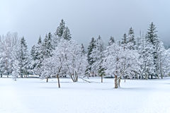 Ландшафт зимы деревянный Стоковые Изображения