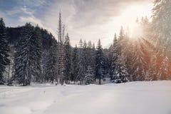 Ландшафт зимы леса елей Стоковое фото RF
