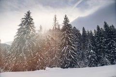 Ландшафт зимы леса елей Стоковые Изображения