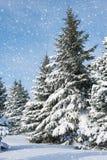 Ландшафт зимы елей Snowy Стоковое Изображение