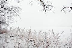 Ландшафт зимы замороженного дерева   Стоковая Фотография